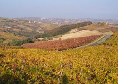 Le vigne in autunno